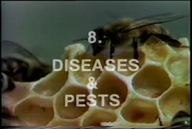 Bees and Beekeeping - Diseases and Pests